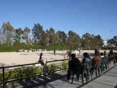 caballos entrenando salto de obstaculos