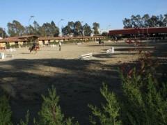 entrenamiento de salto de obstaculos open hipica