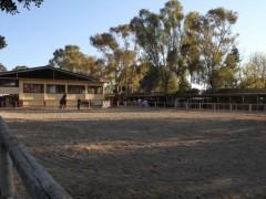 pista al aire libre para caballos
